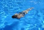 swim-422546_1280 (1)